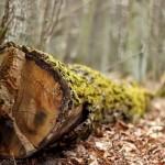 szukając wiosny... w lesie